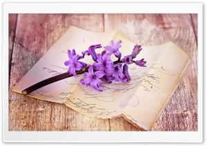 Fresh Hyacinth On Table HD Wide Wallpaper for Widescreen