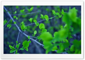 Fresh Leaves All Over HD Wide Wallpaper for Widescreen