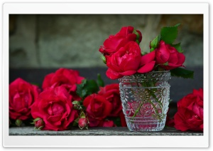 Fresh Red Roses in a Vase HD Wide Wallpaper for Widescreen