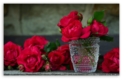 Fresh Red Roses in a Vase ❤ 4K UHD Wallpaper for Wide 16:10 5:3 Widescreen WHXGA WQXGA WUXGA WXGA WGA ; 4K UHD 16:9 Ultra High Definition 2160p 1440p 1080p 900p 720p ; UHD 16:9 2160p 1440p 1080p 900p 720p ; Standard 4:3 5:4 3:2 Fullscreen UXGA XGA SVGA QSXGA SXGA DVGA HVGA HQVGA ( Apple PowerBook G4 iPhone 4 3G 3GS iPod Touch ) ; Smartphone 5:3 WGA ; Tablet 1:1 ; iPad 1/2/Mini ; Mobile 4:3 5:3 3:2 16:9 5:4 - UXGA XGA SVGA WGA DVGA HVGA HQVGA ( Apple PowerBook G4 iPhone 4 3G 3GS iPod Touch ) 2160p 1440p 1080p 900p 720p QSXGA SXGA ; Dual 16:10 5:3 16:9 4:3 5:4 WHXGA WQXGA WUXGA WXGA WGA 2160p 1440p 1080p 900p 720p UXGA XGA SVGA QSXGA SXGA ;