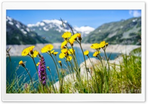 Fresh Spring Air HD Wide Wallpaper for Widescreen