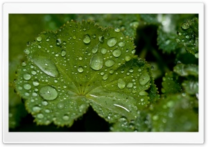 Fresh Water Drops On A Green Leaf HD Wide Wallpaper for Widescreen