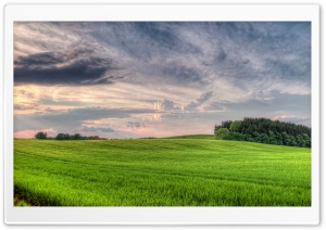 Fresh Wheat Field HD Wide Wallpaper for Widescreen