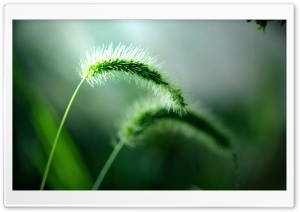 Fresh Wild Plants HD Wide Wallpaper for Widescreen