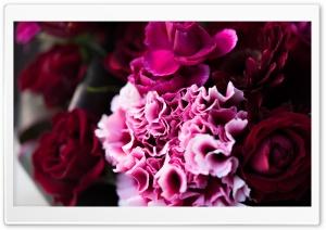 Frill Ultra HD Wallpaper for 4K UHD Widescreen desktop, tablet & smartphone