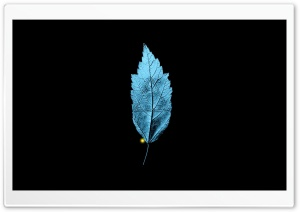 Fringe TV Series   A Leaf With An Embedded Isosceles Triangle HD Wide Wallpaper for Widescreen
