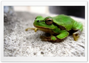 Frog HD Wide Wallpaper for 4K UHD Widescreen desktop & smartphone