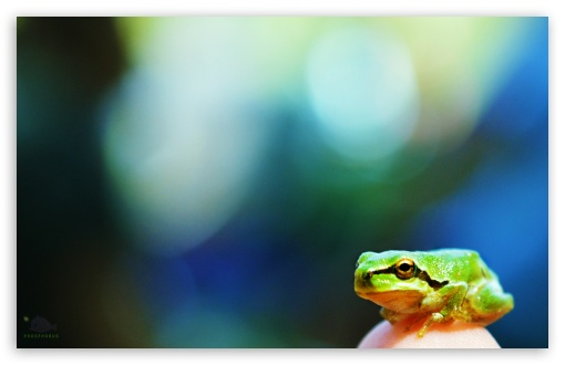 Frog ❤ 4K UHD Wallpaper for Wide 16:10 5:3 Widescreen WHXGA WQXGA WUXGA WXGA WGA ; UltraWide 21:9 24:10 ; 4K UHD 16:9 Ultra High Definition 2160p 1440p 1080p 900p 720p ; UHD 16:9 2160p 1440p 1080p 900p 720p ; Smartphone 16:9 3:2 5:3 2160p 1440p 1080p 900p 720p DVGA HVGA HQVGA ( Apple PowerBook G4 iPhone 4 3G 3GS iPod Touch ) WGA ; Tablet 1:1 ; iPad 1/2/Mini ; Mobile 4:3 5:3 3:2 16:9 5:4 - UXGA XGA SVGA WGA DVGA HVGA HQVGA ( Apple PowerBook G4 iPhone 4 3G 3GS iPod Touch ) 2160p 1440p 1080p 900p 720p QSXGA SXGA ;