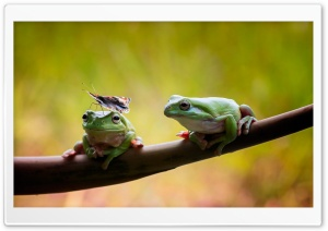 Frogs and Butterfly HD Wide Wallpaper for Widescreen