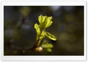 From tiny acorns... HD Wide Wallpaper for Widescreen