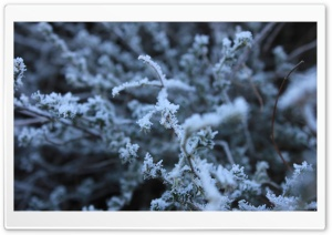 Frost HD Wide Wallpaper for Widescreen