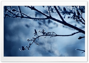 Frost Branch HD Wide Wallpaper for 4K UHD Widescreen desktop & smartphone
