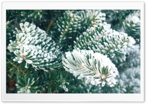 Frost, Christmas Tree HD Wide Wallpaper for Widescreen