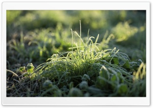 Frost On Grass HD Wide Wallpaper for Widescreen