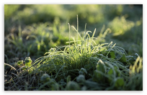 Frost On Grass ❤ 4K UHD Wallpaper for Wide 16:10 5:3 Widescreen WHXGA WQXGA WUXGA WXGA WGA ; 4K UHD 16:9 Ultra High Definition 2160p 1440p 1080p 900p 720p ; UHD 16:9 2160p 1440p 1080p 900p 720p ; Standard 4:3 5:4 3:2 Fullscreen UXGA XGA SVGA QSXGA SXGA DVGA HVGA HQVGA ( Apple PowerBook G4 iPhone 4 3G 3GS iPod Touch ) ; Smartphone 5:3 WGA ; Tablet 1:1 ; iPad 1/2/Mini ; Mobile 4:3 5:3 3:2 16:9 5:4 - UXGA XGA SVGA WGA DVGA HVGA HQVGA ( Apple PowerBook G4 iPhone 4 3G 3GS iPod Touch ) 2160p 1440p 1080p 900p 720p QSXGA SXGA ;