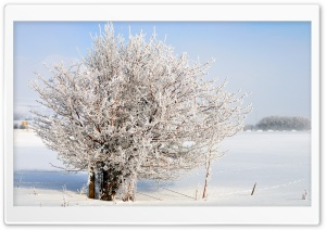 Frost Tree, Charleston, Utah HD Wide Wallpaper for Widescreen