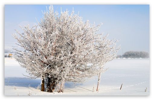 Frost Tree, Charleston, Utah HD wallpaper for Standard 4:3 5:4 Fullscreen UXGA XGA SVGA QSXGA SXGA ; Wide 16:10 5:3 Widescreen WHXGA WQXGA WUXGA WXGA WGA ; HD 16:9 High Definition WQHD QWXGA 1080p 900p 720p QHD nHD ; Other 3:2 DVGA HVGA HQVGA devices ( Apple PowerBook G4 iPhone 4 3G 3GS iPod Touch ) ; Mobile VGA WVGA iPhone iPad PSP Phone - VGA QVGA Smartphone ( PocketPC GPS iPod Zune BlackBerry HTC Samsung LG Nokia Eten Asus ) WVGA WQVGA Smartphone ( HTC Samsung Sony Ericsson LG Vertu MIO ) HVGA Smartphone ( Apple iPhone iPod BlackBerry HTC Samsung Nokia ) Sony PSP Zune HD Zen ;