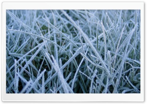 Frosted Grass HD Wide Wallpaper for Widescreen