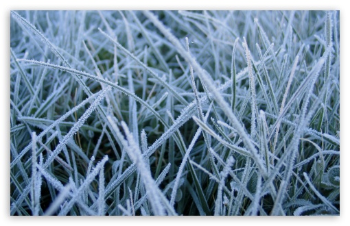 Frosted Grass HD wallpaper for Wide 16:10 5:3 Widescreen WHXGA WQXGA WUXGA WXGA WGA ; HD 16:9 High Definition WQHD QWXGA 1080p 900p 720p QHD nHD ; Standard 4:3 5:4 3:2 Fullscreen UXGA XGA SVGA QSXGA SXGA DVGA HVGA HQVGA devices ( Apple PowerBook G4 iPhone 4 3G 3GS iPod Touch ) ; Tablet 1:1 ; iPad 1/2/Mini ; Mobile 4:3 5:3 3:2 16:9 5:4 - UXGA XGA SVGA WGA DVGA HVGA HQVGA devices ( Apple PowerBook G4 iPhone 4 3G 3GS iPod Touch ) WQHD QWXGA 1080p 900p 720p QHD nHD QSXGA SXGA ;