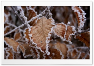Frosted Leaves HD Wide Wallpaper for 4K UHD Widescreen desktop & smartphone
