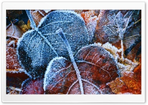 Frosty Autumn Leaves HD Wide Wallpaper for Widescreen