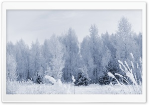 Frosty Forest HD Wide Wallpaper for Widescreen