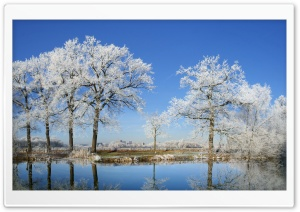 Frosty Trees HD Wide Wallpaper for Widescreen