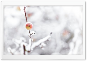 Frozen Apple, Winter HD Wide Wallpaper for Widescreen