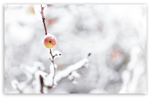 Frozen Apple, Winter HD wallpaper for Wide 16:10 5:3 Widescreen WHXGA WQXGA WUXGA WXGA WGA ; HD 16:9 High Definition WQHD QWXGA 1080p 900p 720p QHD nHD ; UHD 16:9 WQHD QWXGA 1080p 900p 720p QHD nHD ; Standard 4:3 5:4 3:2 Fullscreen UXGA XGA SVGA QSXGA SXGA DVGA HVGA HQVGA devices ( Apple PowerBook G4 iPhone 4 3G 3GS iPod Touch ) ; Tablet 1:1 ; iPad 1/2/Mini ; Mobile 4:3 5:3 3:2 16:9 5:4 - UXGA XGA SVGA WGA DVGA HVGA HQVGA devices ( Apple PowerBook G4 iPhone 4 3G 3GS iPod Touch ) WQHD QWXGA 1080p 900p 720p QHD nHD QSXGA SXGA ; Dual 16:10 5:3 4:3 5:4 WHXGA WQXGA WUXGA WXGA WGA UXGA XGA SVGA QSXGA SXGA ;