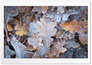 Frozen Autumn HD Wide Wallpaper for 4K UHD Widescreen desktop & smartphone