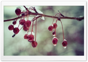 Frozen Berries HD Wide Wallpaper for Widescreen