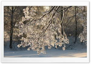Frozen Branch HD Wide Wallpaper for Widescreen