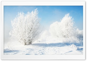 Frozen Bushes HD Wide Wallpaper for Widescreen