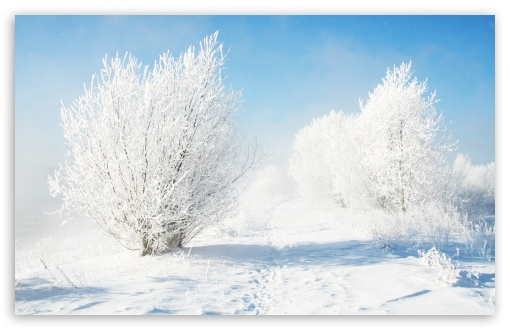 Frozen Bushes HD wallpaper for Wide 16:10 5:3 Widescreen WHXGA WQXGA WUXGA WXGA WGA ; HD 16:9 High Definition WQHD QWXGA 1080p 900p 720p QHD nHD ; Standard 4:3 5:4 3:2 Fullscreen UXGA XGA SVGA QSXGA SXGA DVGA HVGA HQVGA devices ( Apple PowerBook G4 iPhone 4 3G 3GS iPod Touch ) ; Tablet 1:1 ; iPad 1/2/Mini ; Mobile 4:3 5:3 3:2 16:9 5:4 - UXGA XGA SVGA WGA DVGA HVGA HQVGA devices ( Apple PowerBook G4 iPhone 4 3G 3GS iPod Touch ) WQHD QWXGA 1080p 900p 720p QHD nHD QSXGA SXGA ; Dual 5:4 QSXGA SXGA ;