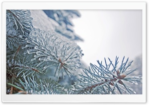 Frozen Fir Tree Needles HD Wide Wallpaper for Widescreen