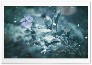 Frozen Flower HD Wide Wallpaper for Widescreen