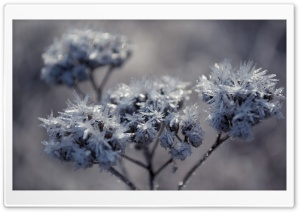 Frozen Flowers HD Wide Wallpaper for Widescreen