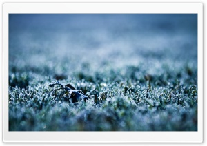 Frozen Grass HD Wide Wallpaper for Widescreen