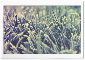 Frozen Grass -Winter HD Wide Wallpaper for Widescreen