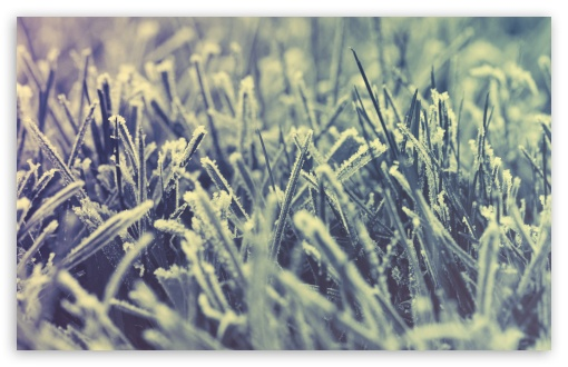 Frozen Grass -Winter ❤ 4K UHD Wallpaper for Wide 16:10 5:3 Widescreen WHXGA WQXGA WUXGA WXGA WGA ; 4K UHD 16:9 Ultra High Definition 2160p 1440p 1080p 900p 720p ; UHD 16:9 2160p 1440p 1080p 900p 720p ; Standard 4:3 5:4 3:2 Fullscreen UXGA XGA SVGA QSXGA SXGA DVGA HVGA HQVGA ( Apple PowerBook G4 iPhone 4 3G 3GS iPod Touch ) ; Smartphone 5:3 WGA ; Tablet 1:1 ; iPad 1/2/Mini ; Mobile 4:3 5:3 3:2 16:9 5:4 - UXGA XGA SVGA WGA DVGA HVGA HQVGA ( Apple PowerBook G4 iPhone 4 3G 3GS iPod Touch ) 2160p 1440p 1080p 900p 720p QSXGA SXGA ; Dual 16:10 5:3 16:9 4:3 5:4 WHXGA WQXGA WUXGA WXGA WGA 2160p 1440p 1080p 900p 720p UXGA XGA SVGA QSXGA SXGA ;