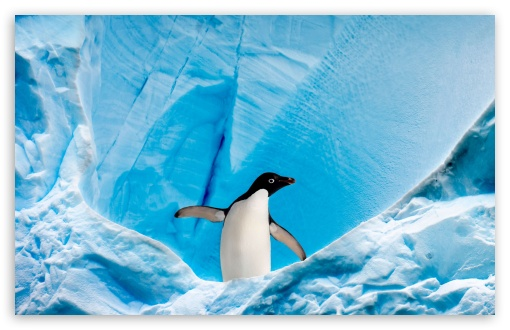 Frozen Landscape HD wallpaper for Wide 16:10 5:3 Widescreen WHXGA WQXGA WUXGA WXGA WGA ; HD 16:9 High Definition WQHD QWXGA 1080p 900p 720p QHD nHD ; Standard 4:3 5:4 3:2 Fullscreen UXGA XGA SVGA QSXGA SXGA DVGA HVGA HQVGA devices ( Apple PowerBook G4 iPhone 4 3G 3GS iPod Touch ) ; Tablet 1:1 ; iPad 1/2/Mini ; Mobile 4:3 5:3 3:2 16:9 5:4 - UXGA XGA SVGA WGA DVGA HVGA HQVGA devices ( Apple PowerBook G4 iPhone 4 3G 3GS iPod Touch ) WQHD QWXGA 1080p 900p 720p QHD nHD QSXGA SXGA ;