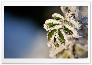 Frozen Leaves HD Wide Wallpaper for Widescreen