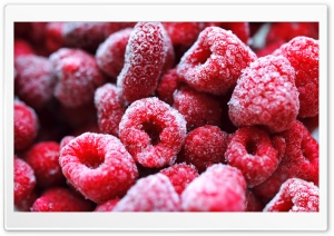 Frozen Red Berries HD Wide Wallpaper for Widescreen