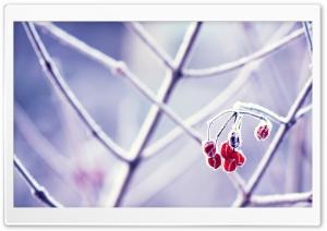 Frozen Red Fruits Ultra HD Wallpaper for 4K UHD Widescreen desktop, tablet & smartphone