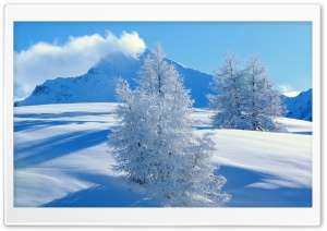Frozen Spruces Mountains HD Wide Wallpaper for Widescreen