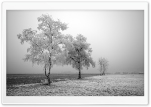 Frozen Trees HD Wide Wallpaper for Widescreen