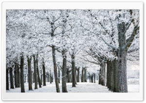 Frozen Trees, Winter Ultra HD Wallpaper for 4K UHD Widescreen desktop, tablet & smartphone