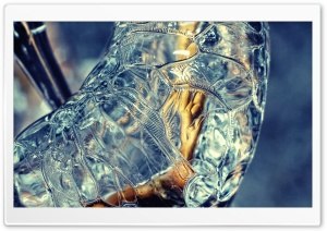 Frozen Twig Macro HD Wide Wallpaper for Widescreen