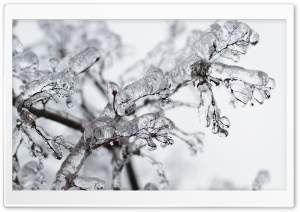 Frozen Twigs HD Wide Wallpaper for Widescreen