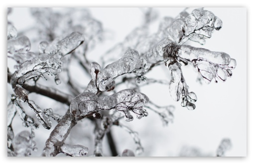 Frozen Twigs HD wallpaper for Wide 16:10 5:3 Widescreen WHXGA WQXGA WUXGA WXGA WGA ; HD 16:9 High Definition WQHD QWXGA 1080p 900p 720p QHD nHD ; UHD 16:9 WQHD QWXGA 1080p 900p 720p QHD nHD ; Standard 4:3 5:4 3:2 Fullscreen UXGA XGA SVGA QSXGA SXGA DVGA HVGA HQVGA devices ( Apple PowerBook G4 iPhone 4 3G 3GS iPod Touch ) ; Smartphone 5:3 WGA ; Tablet 1:1 ; iPad 1/2/Mini ; Mobile 4:3 5:3 3:2 16:9 5:4 - UXGA XGA SVGA WGA DVGA HVGA HQVGA devices ( Apple PowerBook G4 iPhone 4 3G 3GS iPod Touch ) WQHD QWXGA 1080p 900p 720p QHD nHD QSXGA SXGA ; Dual 16:10 5:3 16:9 4:3 5:4 WHXGA WQXGA WUXGA WXGA WGA WQHD QWXGA 1080p 900p 720p QHD nHD UXGA XGA SVGA QSXGA SXGA ;
